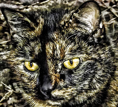 Gray Tabby Digital Art - Cali by Kristie  Bonnewell