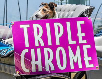 Dog Race Track Photograph - California Chrome Fans  by Pamela Schreckengost