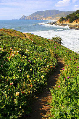 Landscape Photograph - California Coast Trail by Carol Groenen