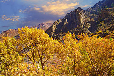 High Sierra Photograph - California Gold by Lynn Bauer