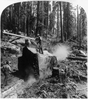 Logging Painting - California Lumberjacks, C1902 by Granger