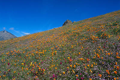 Landscape Photograph - California Poppies Baby Blue Eyes And Owl Clover by Susan Rovira