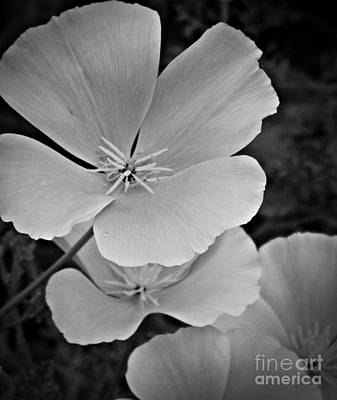Neurotic Images Photograph - California Poppy Bw by Chalet Roome-Rigdon