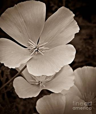 Neurotic Images Photograph - California Poppy Sepia by Chalet Roome-Rigdon