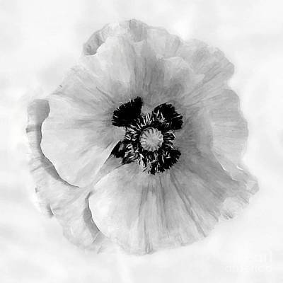 California Poppy White On White Original by Bob and Nadine Johnston