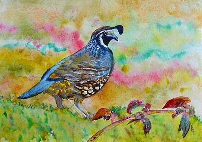 Delicate Details Painting - California Quail by Beverley Harper Tinsley