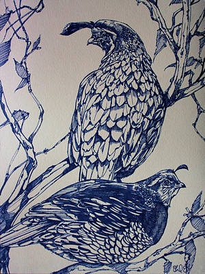 Ink Drawing Drawing - California Quail by Derrick Higgins