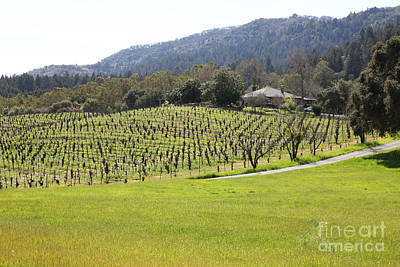 Napa Valley And Vineyards Photograph - California Vineyards In Late Winter Just Before The Bloom 5d22073 by Wingsdomain Art and Photography