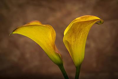 Abstract Photograph - Calla Lilies by Sebastian Musial