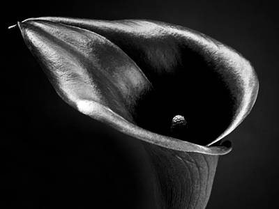 Calla Lily Flower Black And White Photograph Print by Artecco Fine Art Photography