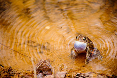 Frogs Photograph - Calling All Frogs by Courtney Webster
