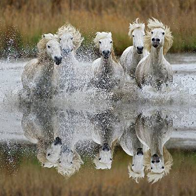 Camargue Horses And Reflection Print by Adam Jones