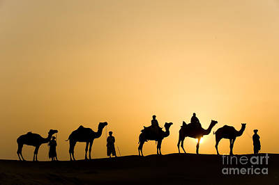 Camel Photograph - Camel Caravan, India by John Shaw