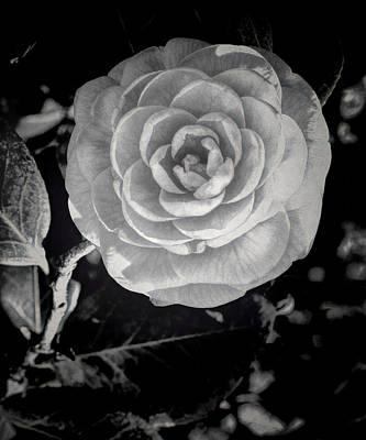 Camellia 6 Bw Hdr Art Original by Lesa Fine