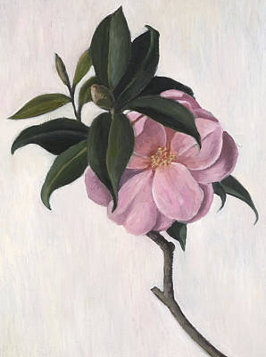 Leaf Drawing - Camellia by Ruth Addinall