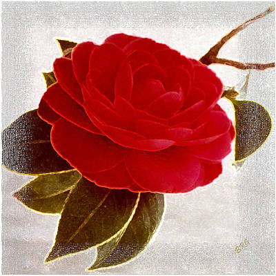 Camellia Photograph - Camellia Spectacular by Ben and Raisa Gertsberg