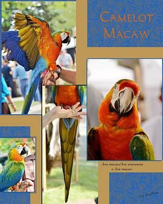Macaw Mixed Media - Camelot Macaw Poster by Kae Cheatham