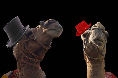 Camels Photograph - Camels With Hats. by MS  Fineart Creations
