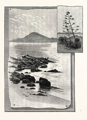 Ape Drawing - Camp Bay. Apes Hill, Africa by English School