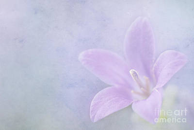 Macro Digital Art - Campanula Portenschlagiana by John Edwards