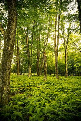 Virginia Photograph - Canaan Path by Shane Holsclaw