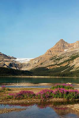 Bow Lake Photograph - Canada, Alberta, Jasper National Park by Jamie and Judy Wild