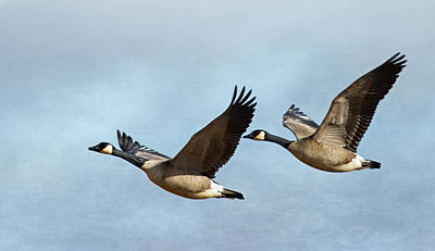 Canada Geese Print by Angie Vogel