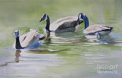 Canada Geese Print by Sharon Freeman