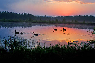 Sunset Photograph - Canada Geese Sunrise by Donna Doherty