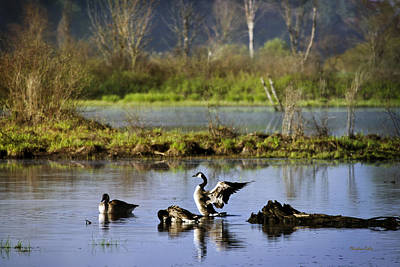 Geese Photograph - Canada Goose Dancing On Lake by Christina Rollo