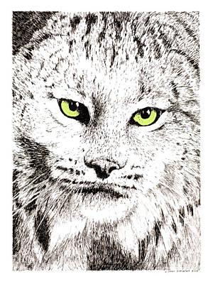 Canadian Lynx Print by Paul Kmiotek