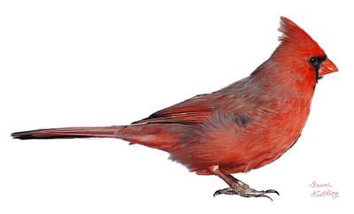 Bird Painting - Canadian Red Cardinal - Male by Bruce Nutting
