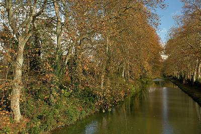 Plane Tree Photograph - Canal Du Midi And Plane Trees by Bob Gibbons