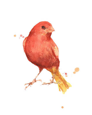 Canary Painting - Canary Bird by Alison Fennell