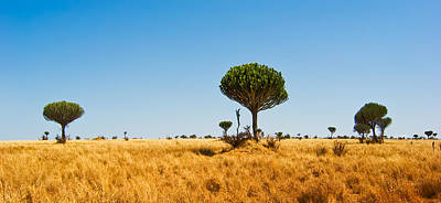Africa Photograph - Candelabra Trees by Adam Romanowicz