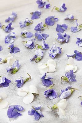 Violet Photograph - Candied Violets by Elena Elisseeva