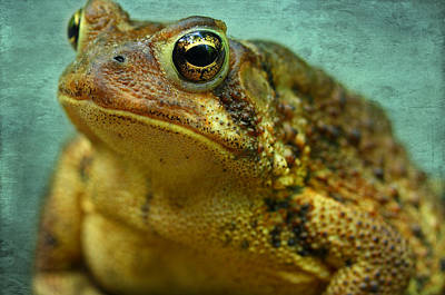 Frogs Photograph - Cane Toad by Michael Eingle