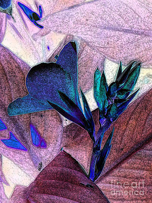 Canna Photograph - Canna 2 by Diane DiMarco