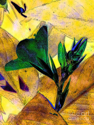 Canna Photograph - Canna 3 by Diane DiMarco