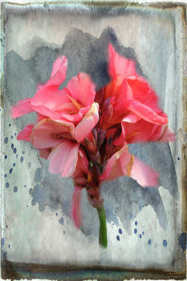 Canna Lily Print by Paulette B Wright