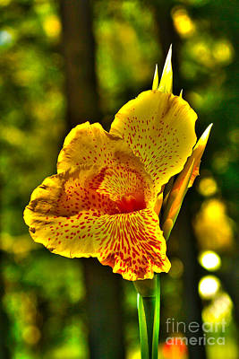 Photograph - Canna Wow by Kim Pate