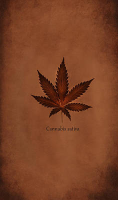 Cannabis Sativa Phone Case Print by Mark Rogan