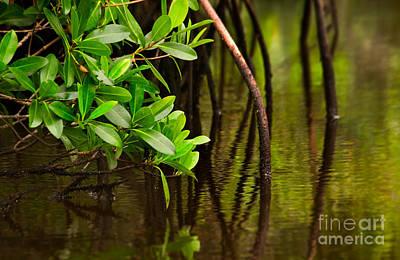 Canoeing Through Quiet Mangroves Print by Matt Tilghman