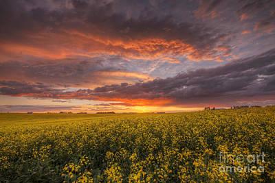 Alberta Prairie Landscape Photograph - Canola At Sunset by Dan Jurak