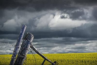 Canola Field In Southern Alberta Print by Randall Nyhof