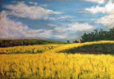 Canola Fields In Rimbey Alberta Print by Fiona Graham