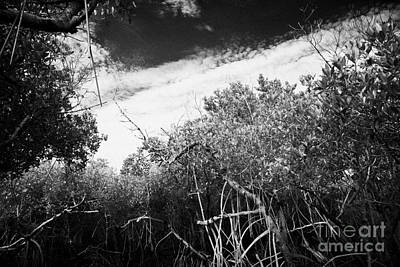 Canopy Of The Mangrove Forest In The Florida Everglades Usa Print by Joe Fox