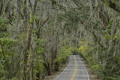 Tallahassee Photograph - Canopy Road by Christian Heeb