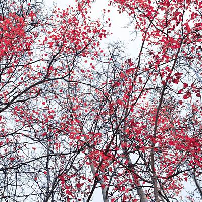 Red Leavies Photograph - Canopy Trees by Priska Wettstein
