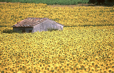 Europe Provence Aix-en-provence Photograph - Cant In Sunflower Field by Gilles Martin-Raget